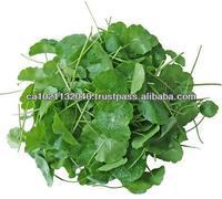 Gotukola - Premium Quality Traditional Herbal Tea
