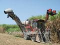 Taiwan la caña de azúcar hoja