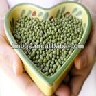 High Quality Organic Green Beans