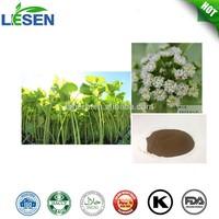 Organic Butterbur Extract with Petasins and Petasitin