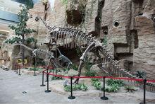 MY Dino-Museum exhibit life size dinosaur replica metal skeleton hands