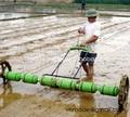 riso paddy seminatrice