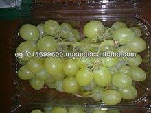 Fresh Grapes ( Superior -Flame -Crimson-Thompson -Red Globe ...)