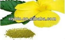 Factory price buik Damiana extract/Gonzalitosin(cyanogic glycoside) arbutin,Damianin /CAS 484-12-8/Damiana de Guerre extract
