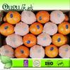 2014 Fresh navel orange(citrus fruit)