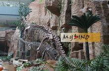 MY Dino-Museum dinosaurs fossils kids animal replica model