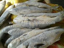 frozen threadfin bream / ikan senangin