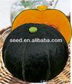 植栽f1スカッシュの野菜の種カボチャの雑種