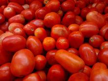 BANGALORE TOMATO