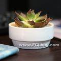 Ronda de cerámica forma echelonment planta suculenta homegarden decoración olla de cepillado 4.2cm