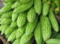 calabaza amarga hortalizasfrescas