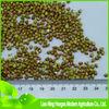export new green buckwheat