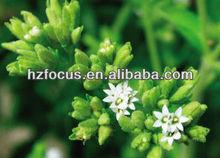 China Stevia sugar