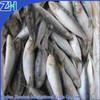 frozen frozenardine fish for market on sale