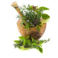 Yerba Mate Leaf Extract