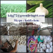from China Garlic City / red color fresh garlic
