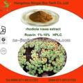 orgánica extracto de rhodiola rosea