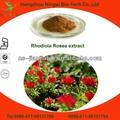 natural extracto de rhodiola rosea