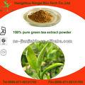 los polifenoles del té verde té de extracto de hoja de