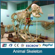 JLDF-G-0038 Life Size Replica Elephant Skulls
