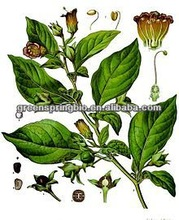 Names all fruits belladonnae extract hyoscyamine,High quality belladonna plaster