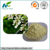 Top Quality Sophora Japonica Extract Quercetin 98% Supplier