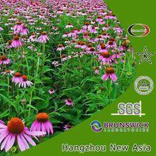 Echinacea Extract, Echinacea Purpurea Extract