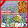 Best Quality Radix Scutellariae Extract,30~98% Baicalin