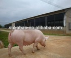 Animal Feed Probiotic for Fattening Pigs Growth