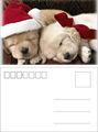 caliente de la moda de alta resolución para animales perro navidad 3d tarjeta lenticular