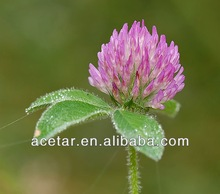 High Quality Red Clover Extract --- Isoflavones