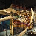 crecen en el agua de los dinosaurios tamaño de la vida del esqueleto