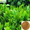 green tea extract powder, Catechins: 15%-90%, Caffeine: 0.5%-5%