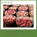 nombre científico de todas las frutas de manzana fuji rojo al por mayor precio de mercado