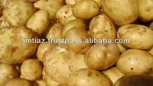 Export Potato from Pakistan