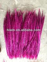 Zebra feathers