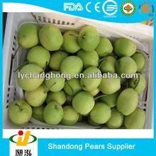 shandong pear/korea pear/ fresh fruit exporters China