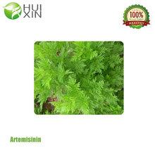Sweet wormwood herb