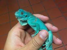 Reptiles Live Farm Bred Captive