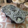 Mesa con natural fosilizado mármol amonitas y orthocerases