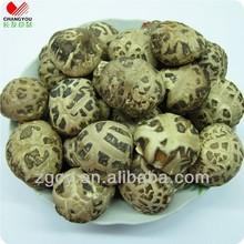 2-3cm Autumn plant tea flower mushroom