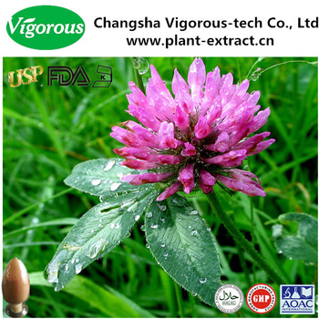 red clover extract powder/red clover extract for antibiotic/Isoflavones 8%-60%