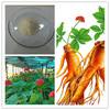 ginseng root extract / ginseng extract powder ginseng root p.e