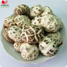 Weiße blume shiitake-pilz pflanzer