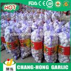 Chinese fresh pure white garlic for UK
