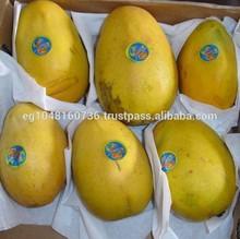 Egyptian fresh mango for export