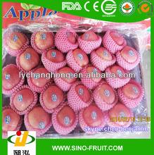 Fresh maçã fruta/nome científico de frutas na china