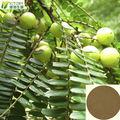 100% puro Emblic Leafflower extrato de redução de lipídios