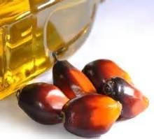 CPO Crude Palm Oil B100