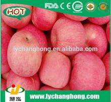 Yantai fuji apple/organic fruit/china fresh apple in qixia
